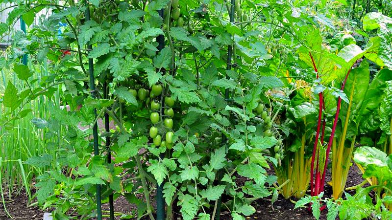 Удачное соседство в огороде