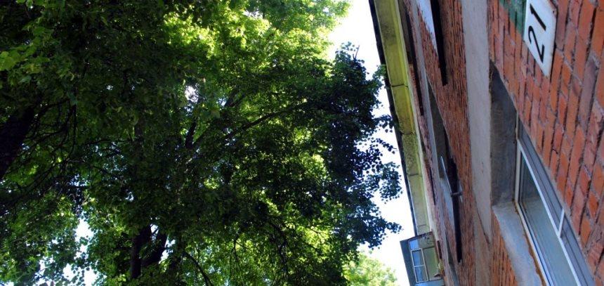 Дерево близко к дому