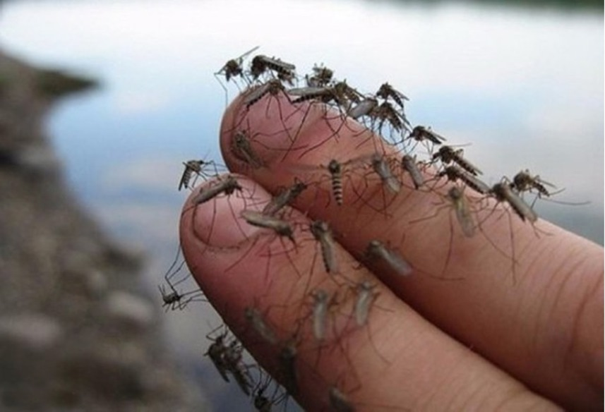 Комары на даче