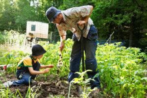 летние дела в огороде