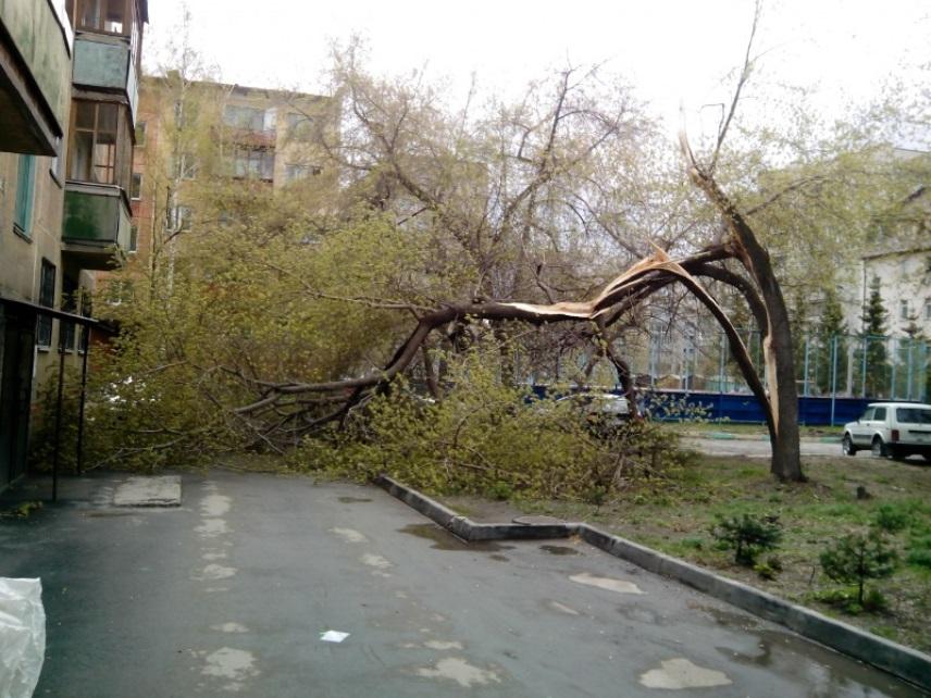 Сломанное дерево, спилить дерево