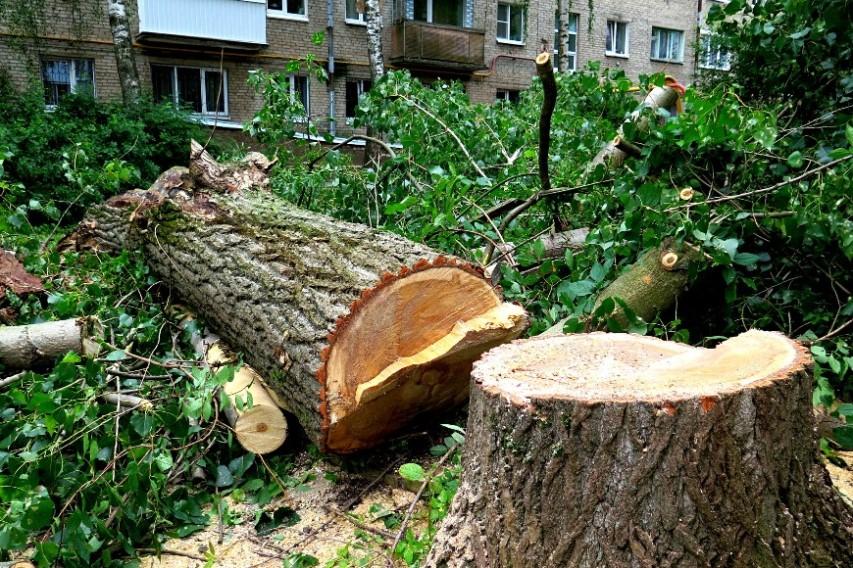 Спилить дерево, нужна техника
