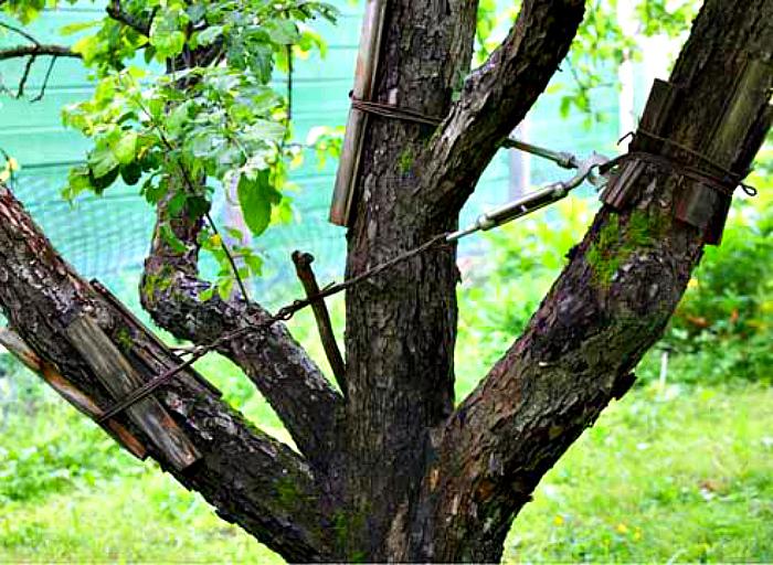 позаботиться о старых деревьях