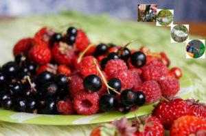 Уход за ягодниками