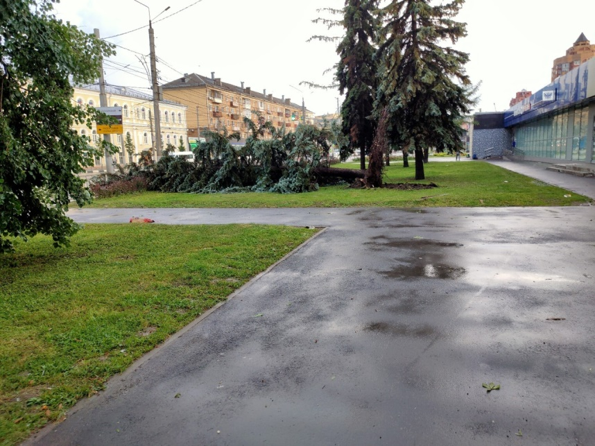 Упало дерево, спилить дерево