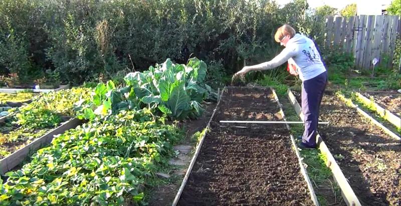 Посев сидератов в сентябре