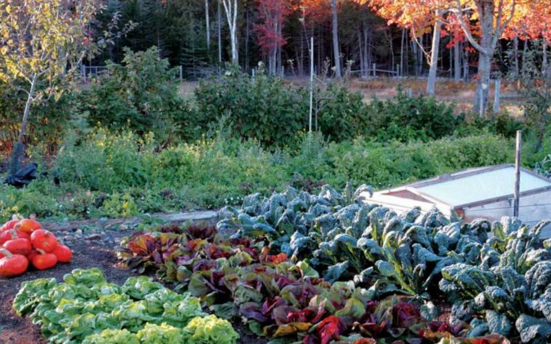 Сентябрьский огород