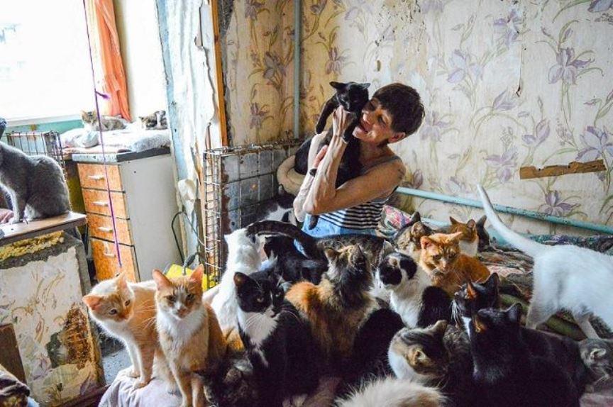 Домашние животные, кошки