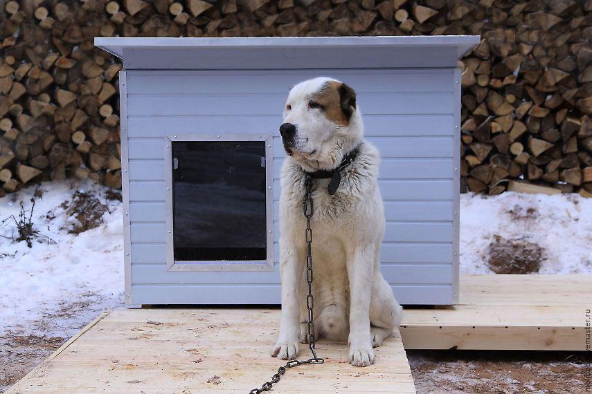 Домашние животные, собака на привязи
