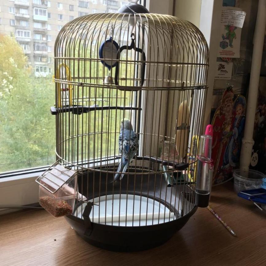 Попугай в квартире