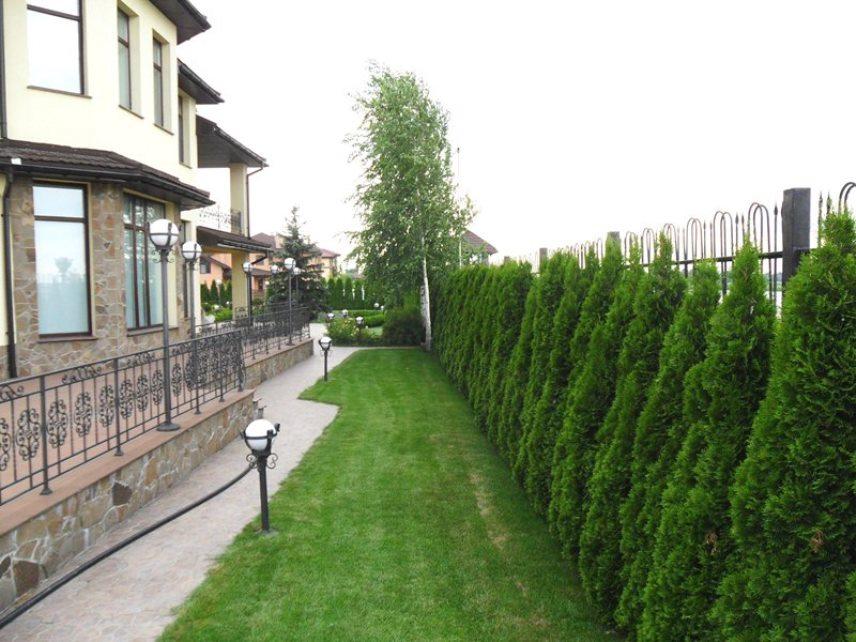 Забор и живая изгородь