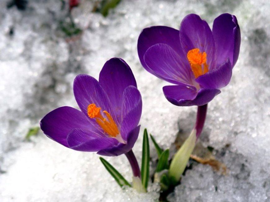 Цветник в марте