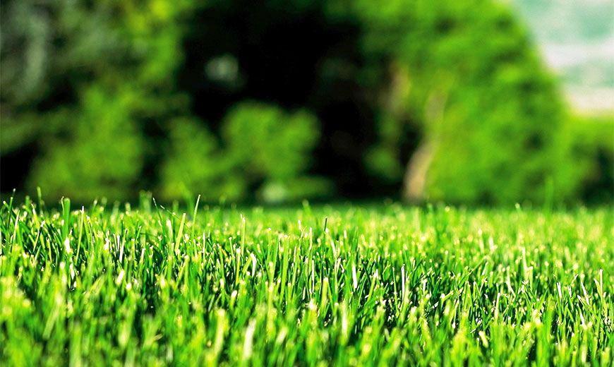 апрельский газон