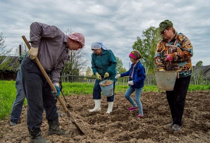 Дачники сажают картошку