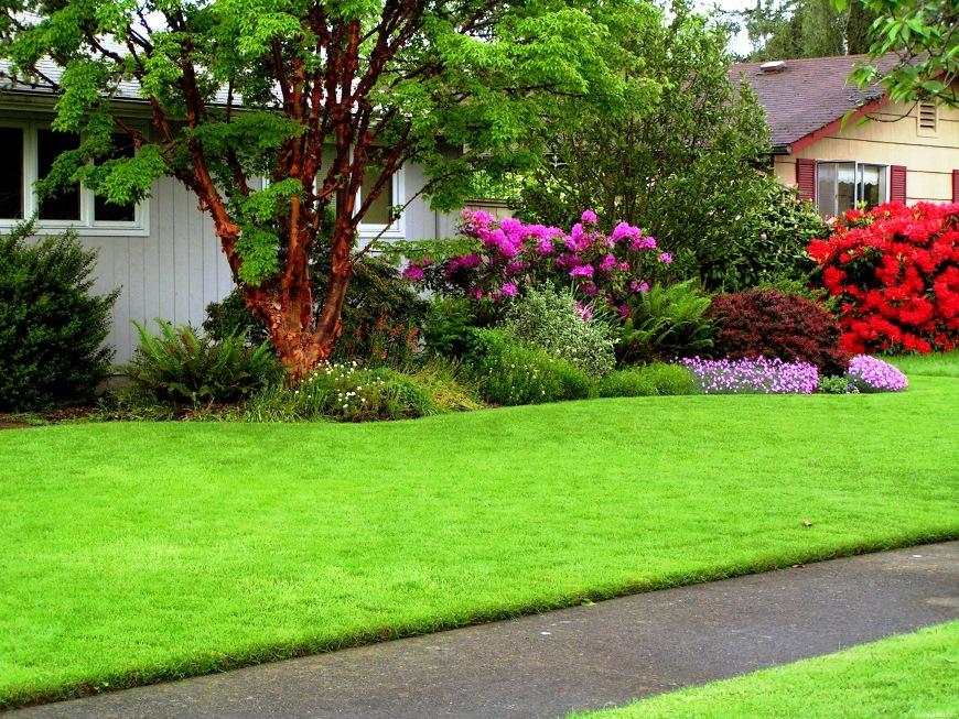 газон в мае