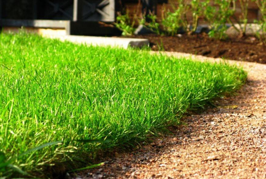 отросший газон